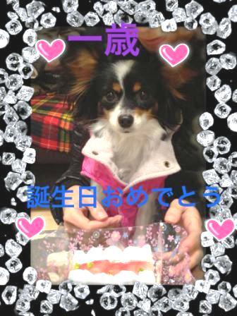 コピー ~ azuki