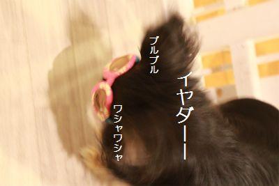 IMG_4064.jpg