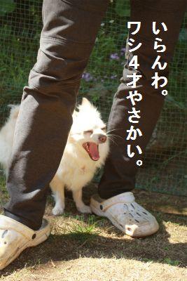 IMG_9590.jpg