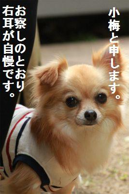 IMG_9669.jpg