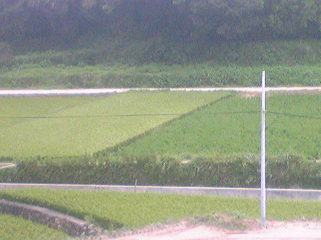 Rice paddy 20130908