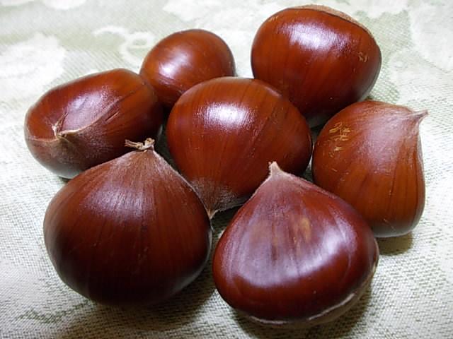 Chestnut 20130926
