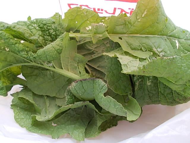 Katsuona spinach 20131018