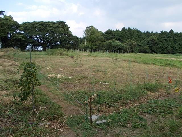 Vineyard 20130922-2