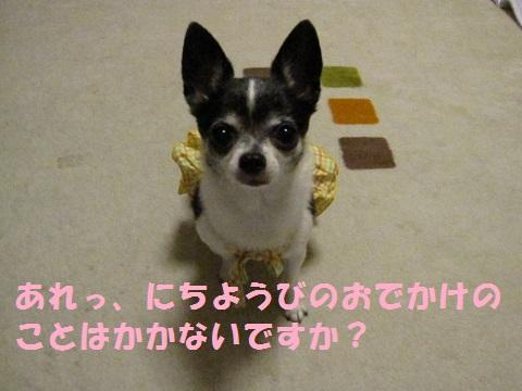 IMG_0034ブログ