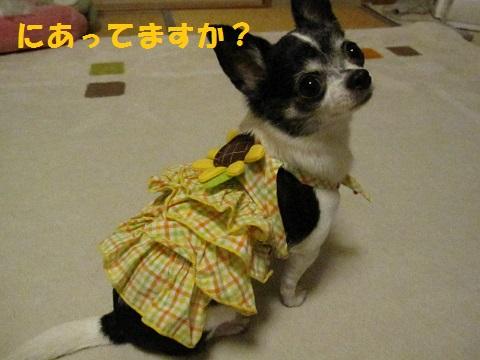 IMG_0035ブログ
