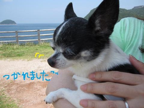 IMG_0113 ブ