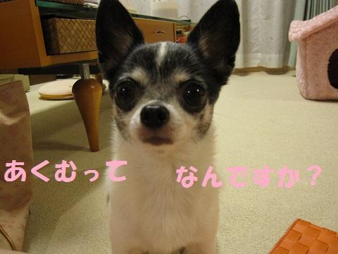 IMG_0131ブログ