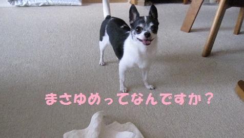 IMG_0147ブログ
