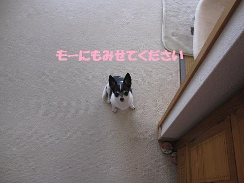 IMG_0543ブログ