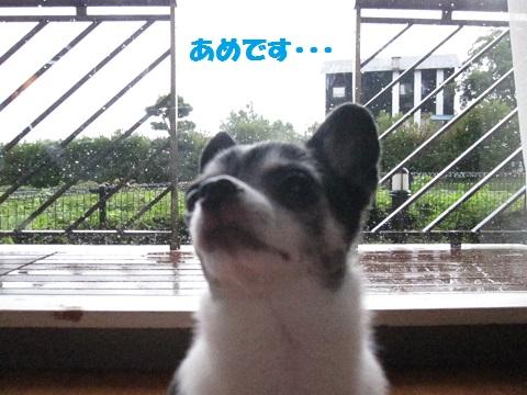 IMG_0758ブログ