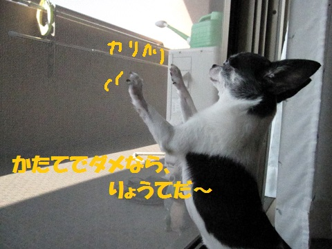 IMG_0514ブログ