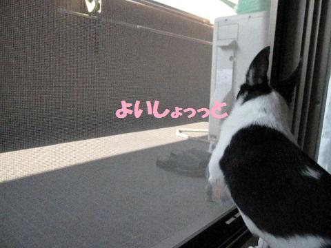 IMG_0513ブログ
