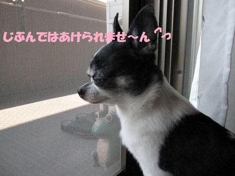 IMG_0507ぶぉぐ