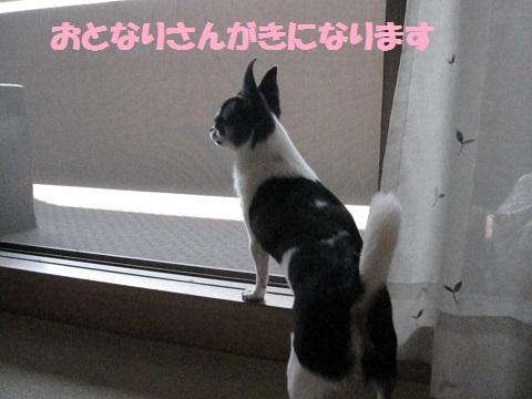 IMG_0525ブログ