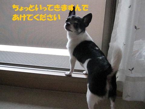 IMG_0526ブログ