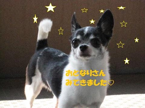 IMG_0519ブログ