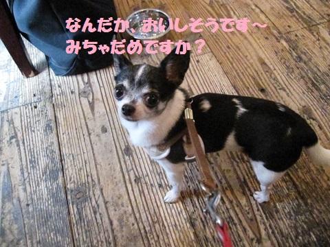 IMG_0817blog_201309110854208d5.jpg