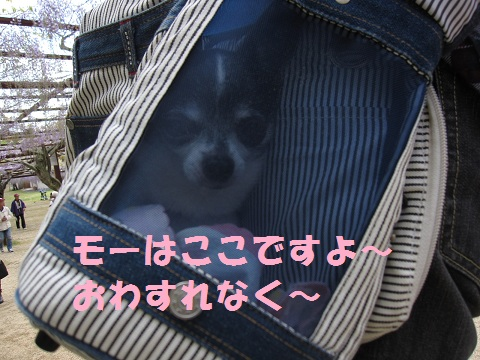 IMG_7854.jpg