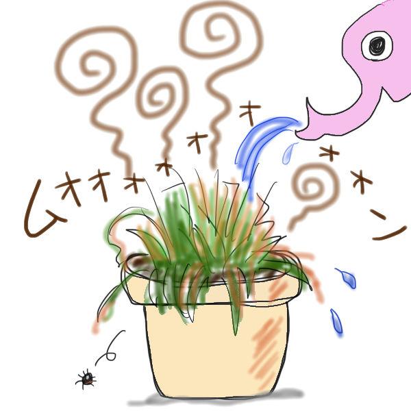 マルムシ草