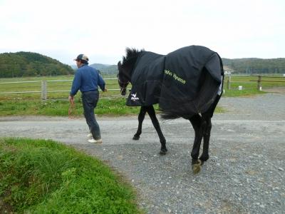 馬服P1030411 放牧地1