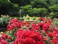 バラの里見公園
