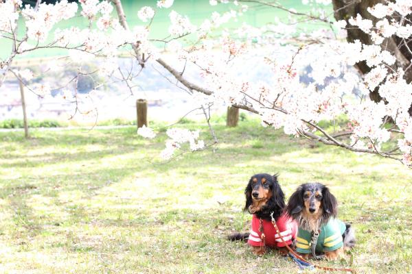 2013-03-27-501.jpg