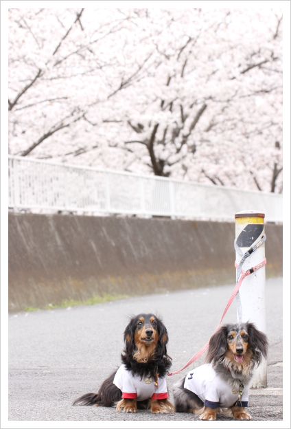 2013-03-29-14.jpg