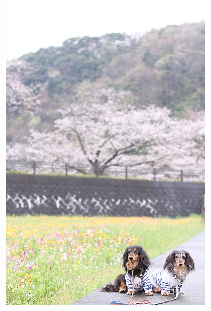 2013-04-05-19.jpg