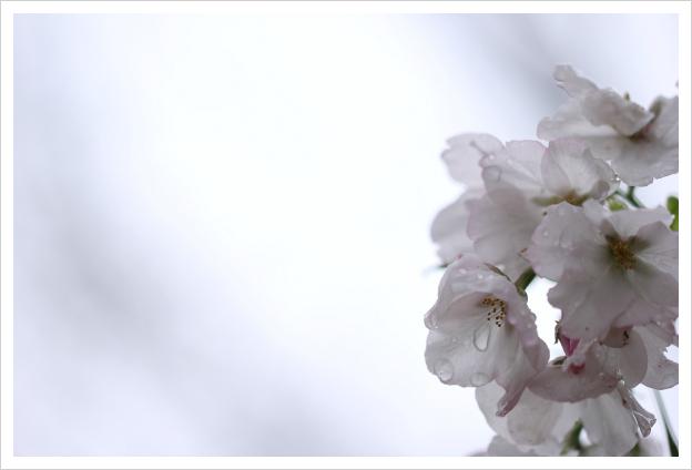 2013-04-07-35.jpg