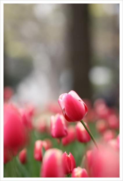 2013-04-15-03.jpg