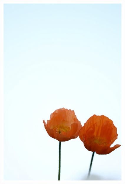 2013-04-26-21.jpg