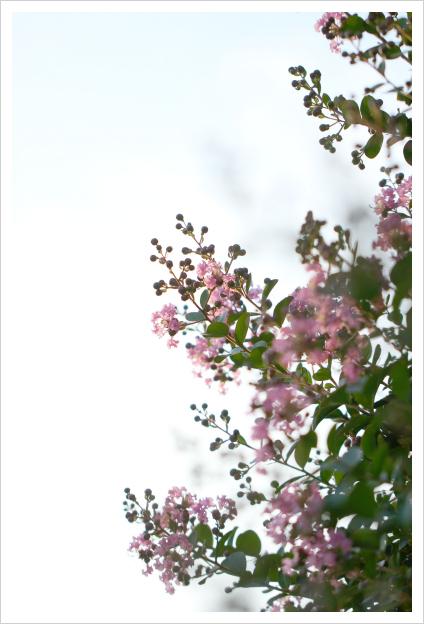 2013-07-29-01.jpg