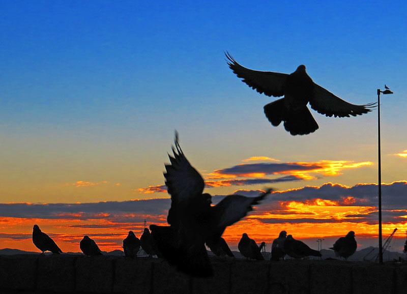 bird silhouette1