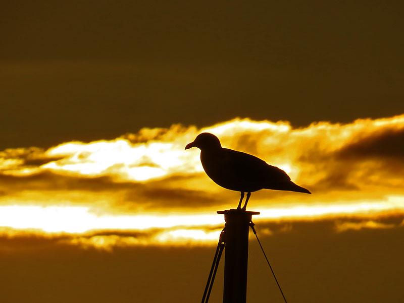 bird silhouette2