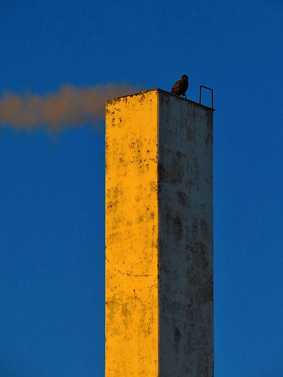 bird silhouette3