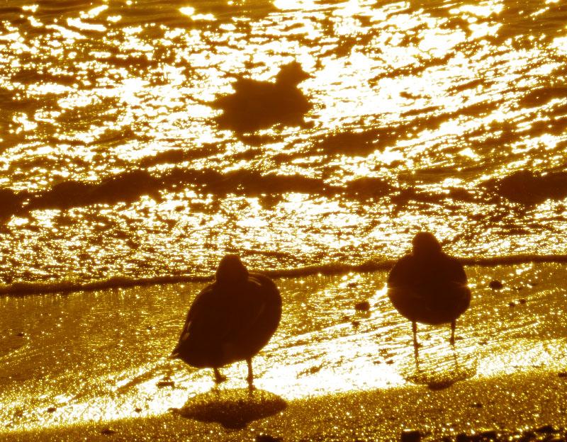 bird silhouette4