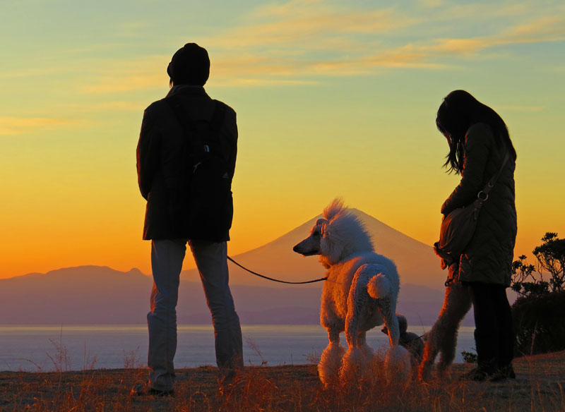 131230犬と見る富士1