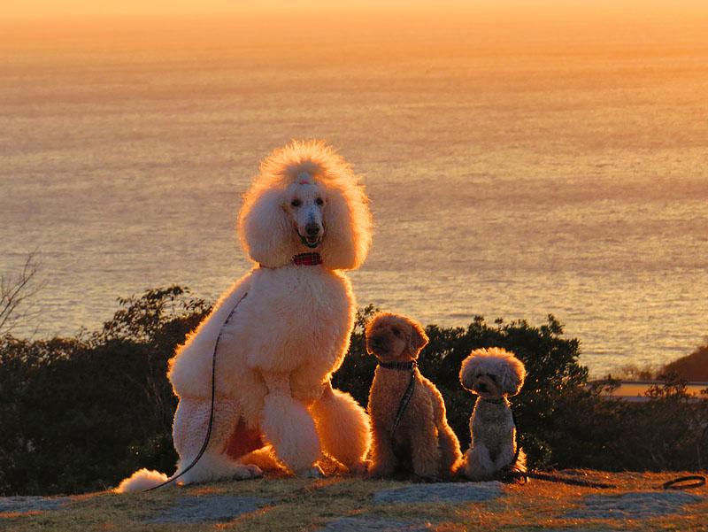 131230犬と見る富士2