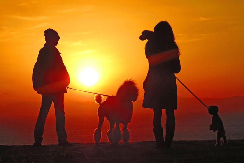 131230犬と見る富士3