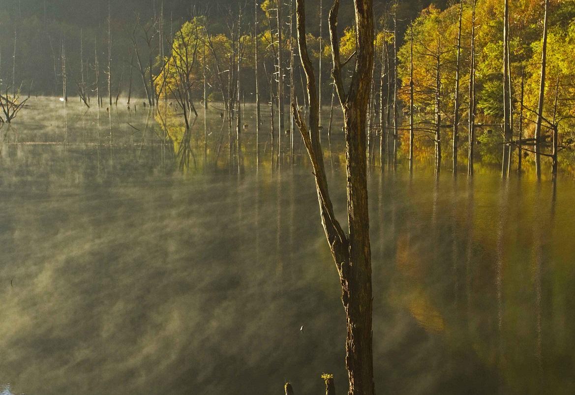 ブログ自然湖21