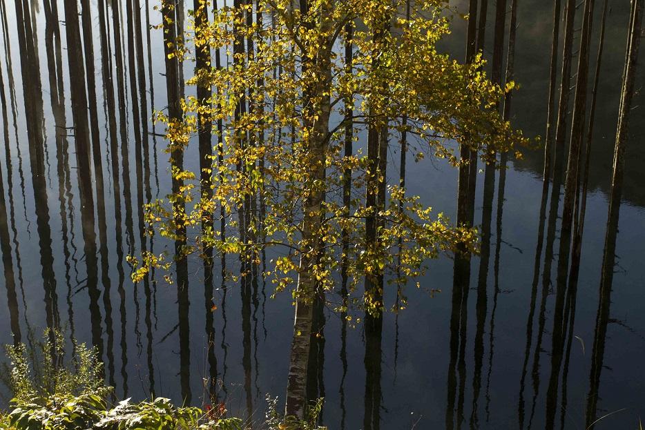 ブログ自然湖26