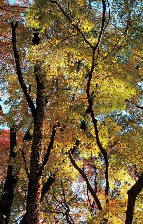 ブログ金蔵寺3