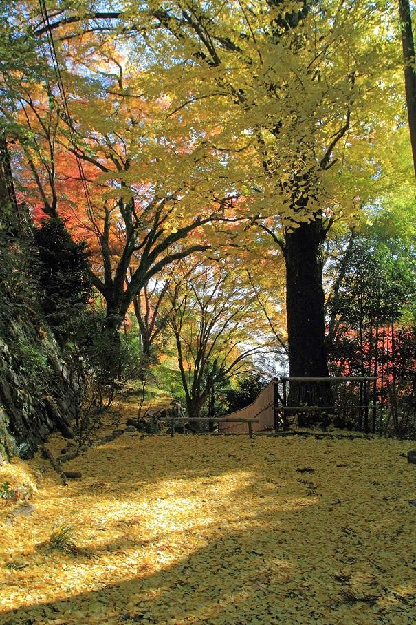 ブログ金蔵寺5