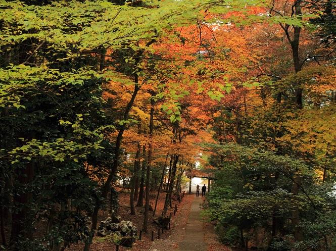 ブログ常照皇寺7