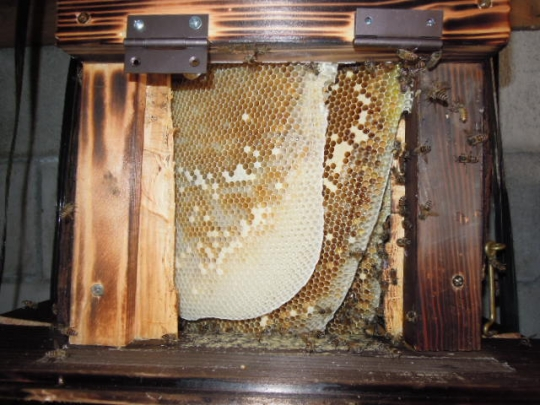 蜜蜂の逃亡
