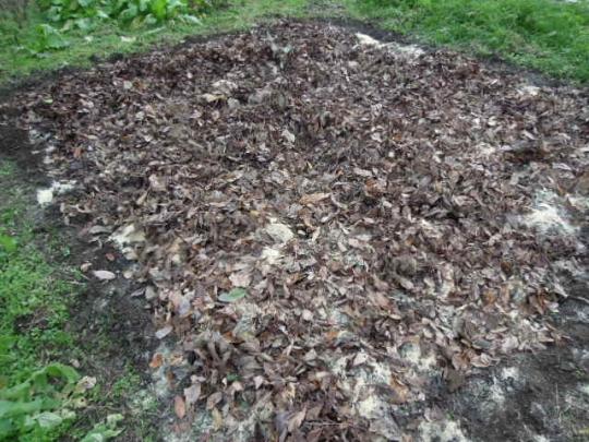 土作り 落ち葉を蒔く 2512