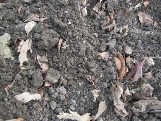 土作り 混ぜる耕す 2512