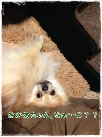 おかあちゃん、なぁ~に??
