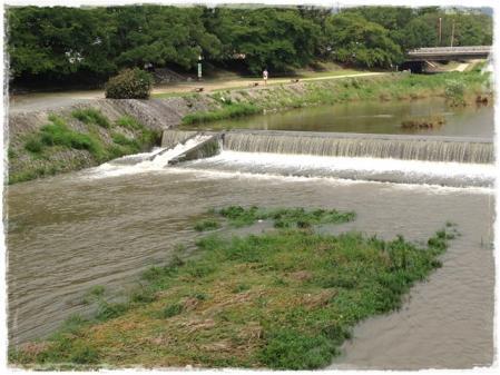先週の鴨川